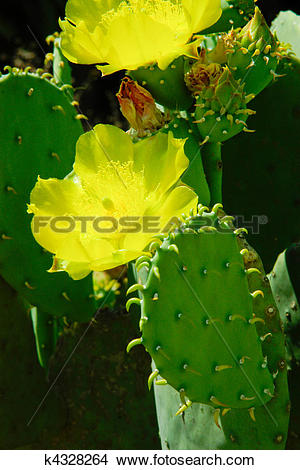 Stock Photo of Cactus flowers and leaves composition. Beautiful.