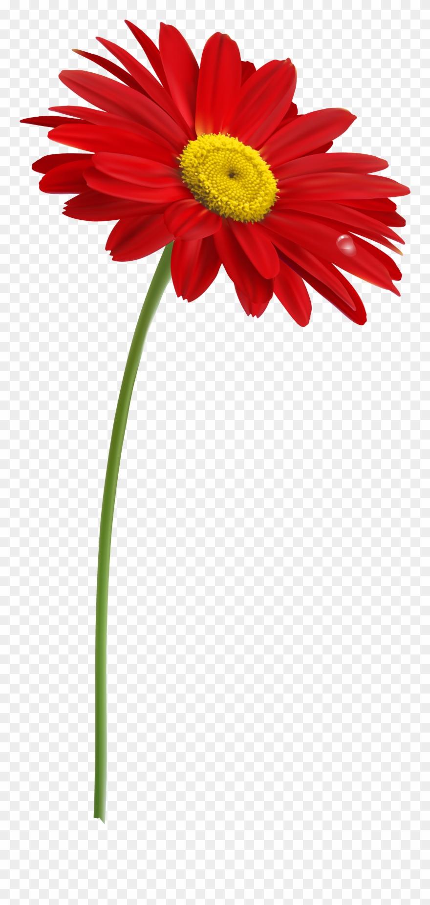 Stem Flower Clip Art With Transparent Background.