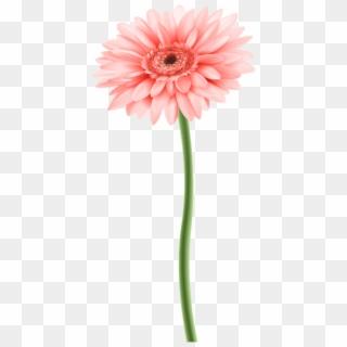 Flower Stem PNG Images, Free Transparent Image Download.