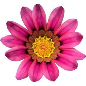 Summer flower clip art.