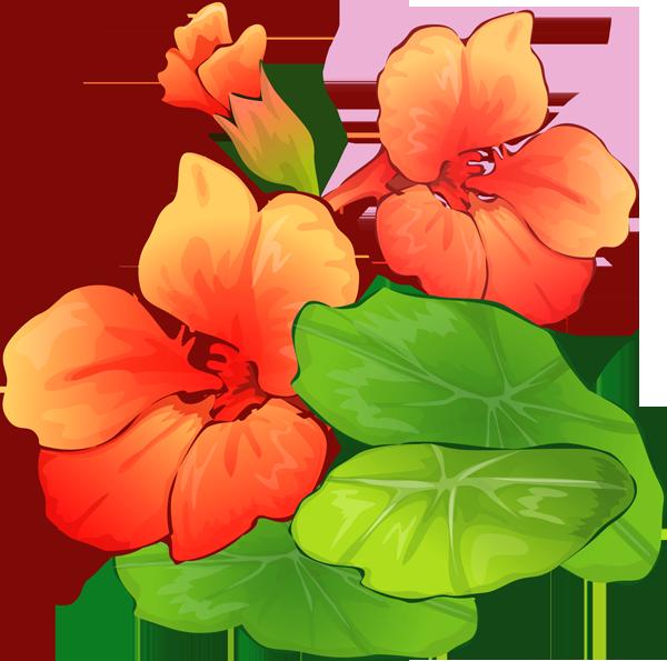 Summer Flowers Clipart.