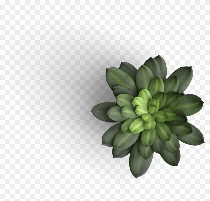 Table Plant Top View Png, Transparent Png.