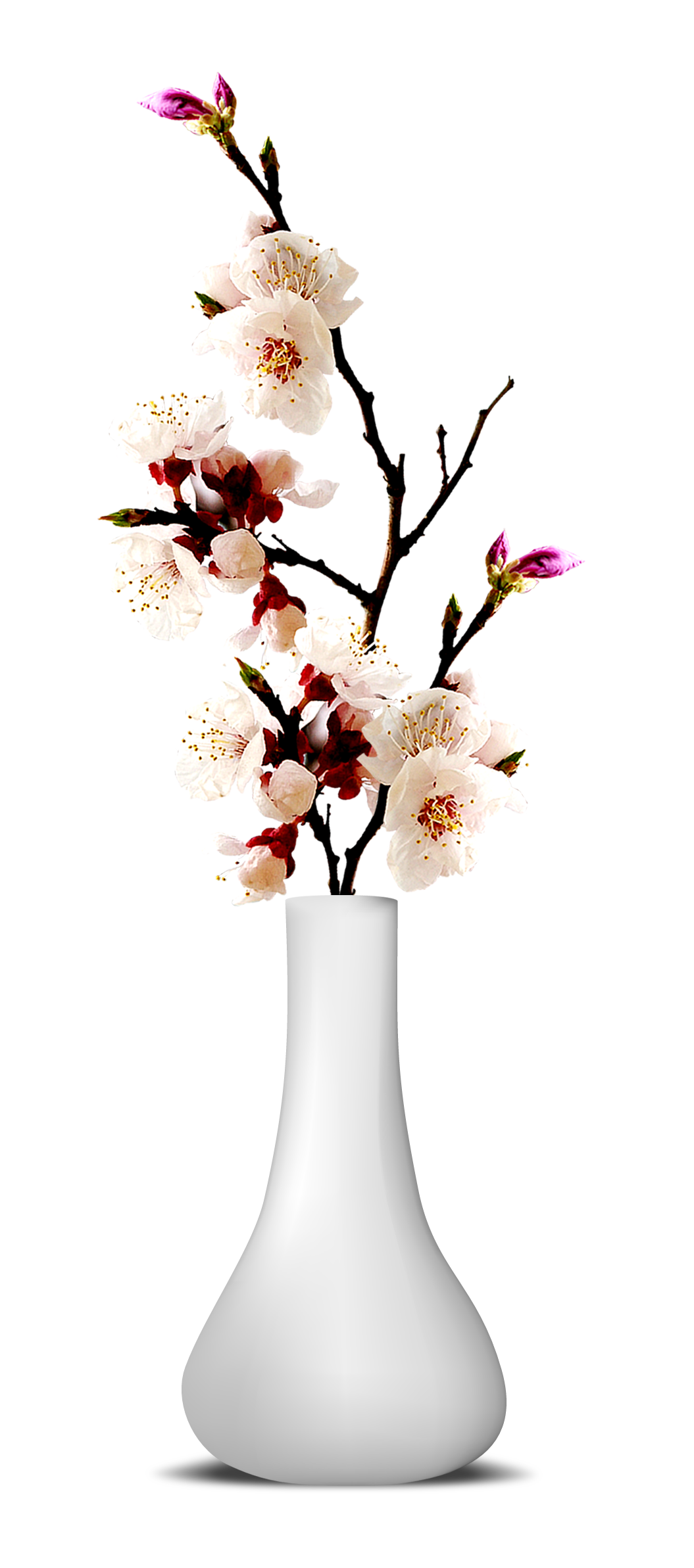 Flower Vase PNG Transparent Image.
