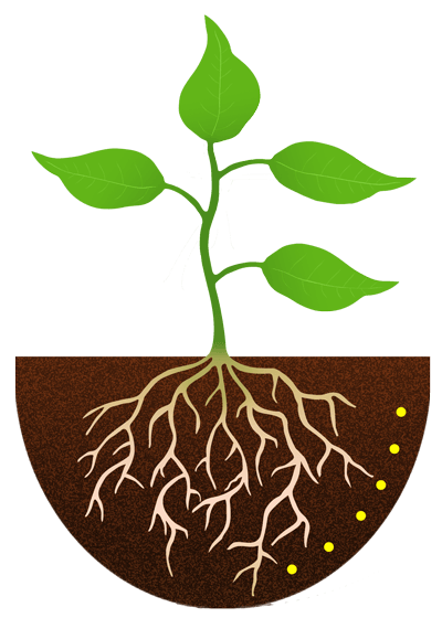 Free Flower Roots Cliparts, Download Free Clip Art, Free.