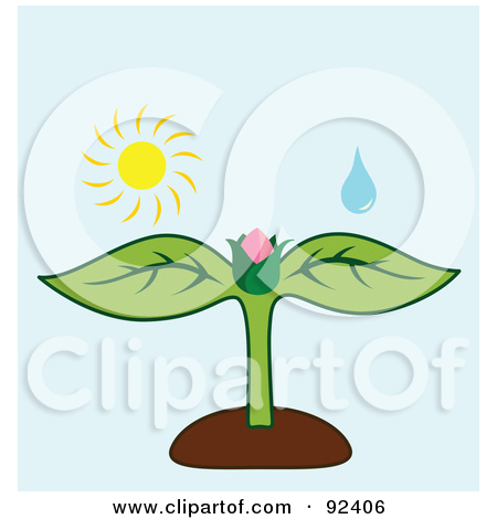 Clip Art Flower Bud.