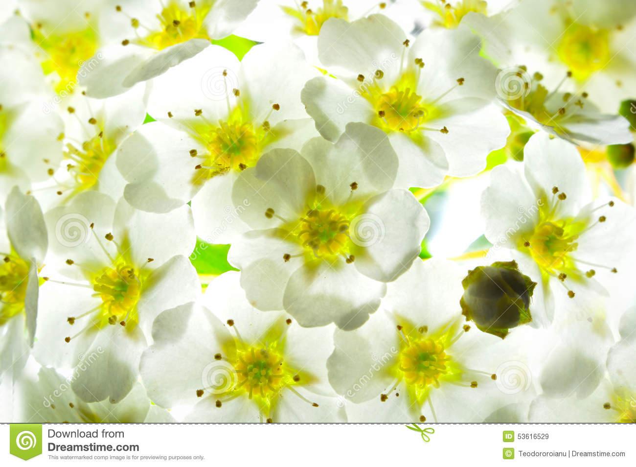 Flowered Background Stock Photo.