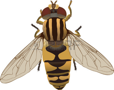Flower Fly Royalty Free Cliparts, Vectors, And Stock Illustration.