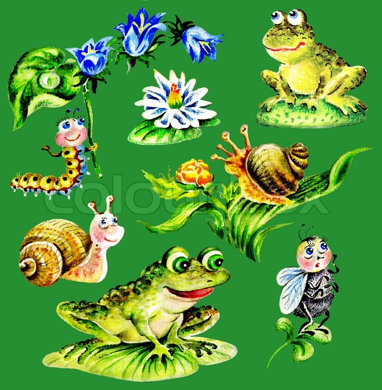 Snails, frogs, Caterpillar with flower, fly, water lily..