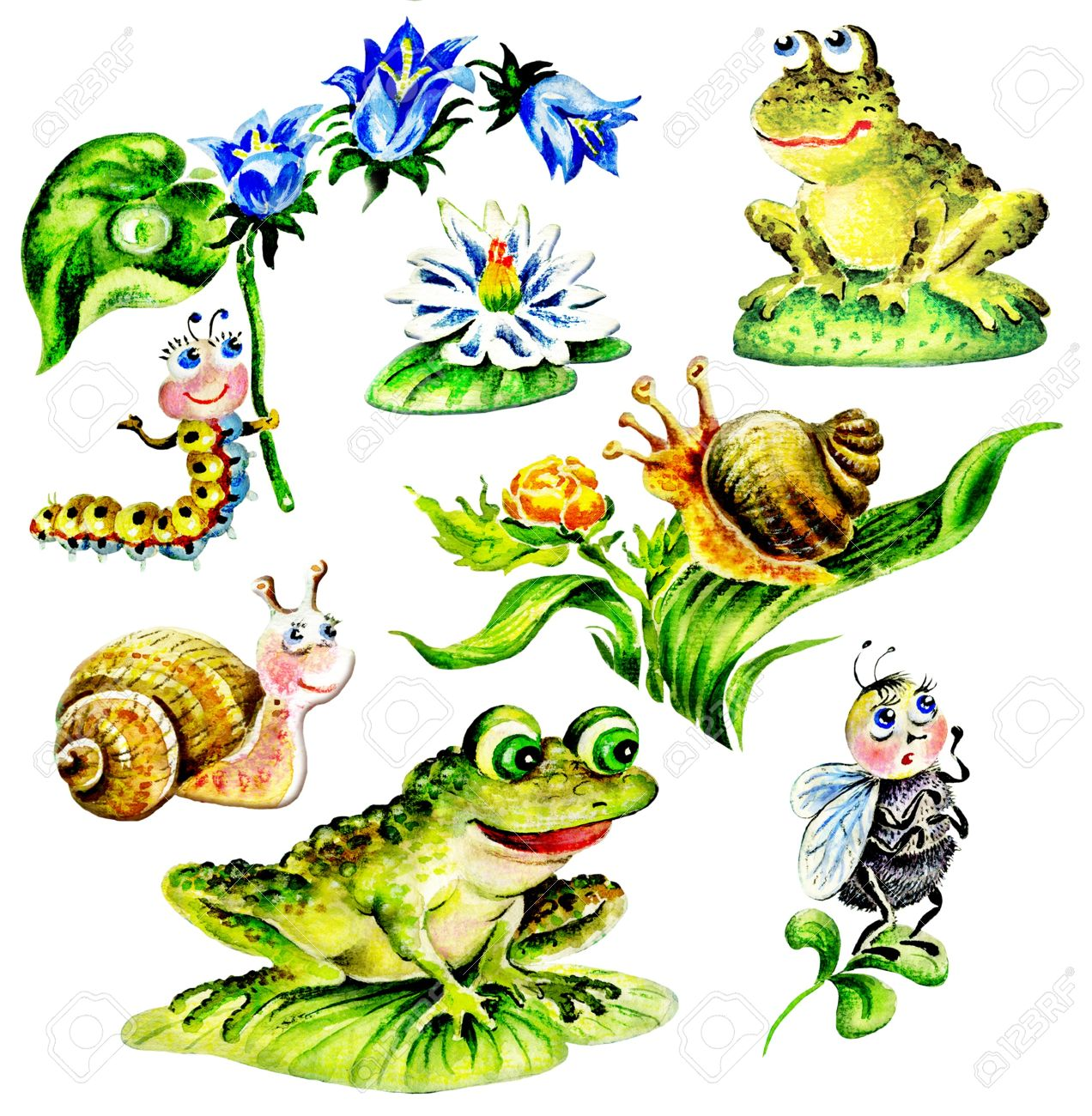 Snails, Frogs, Caterpillar With Flower, Fly, Water Lily. Set.
