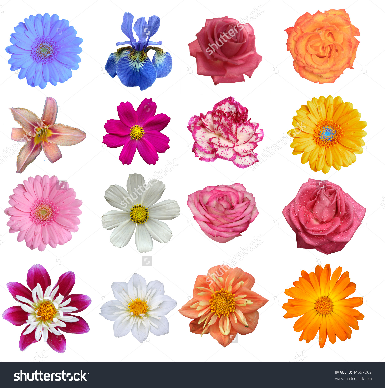 Flower Heads Isolated On White Background Stock Photo 44597062.