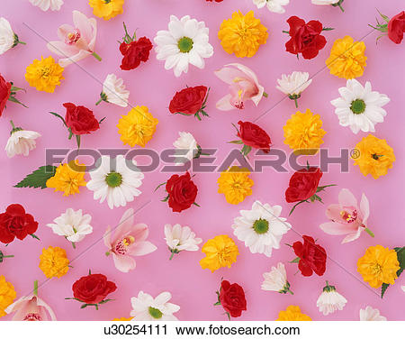 Stock Photography of Assorted flower heads u30254111.