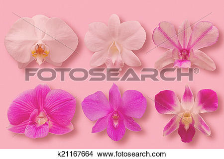 Drawings of Collection set of Orchid Flower heads k21167664.