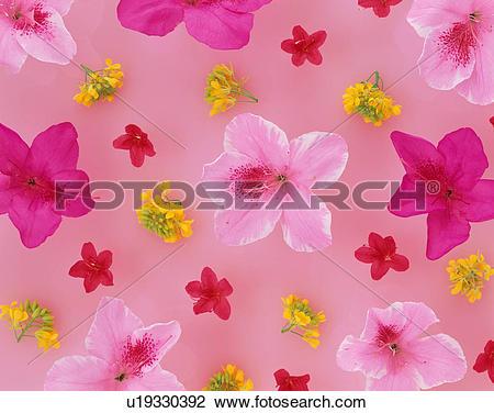 Stock Photo of Assorted flower heads u19330392.