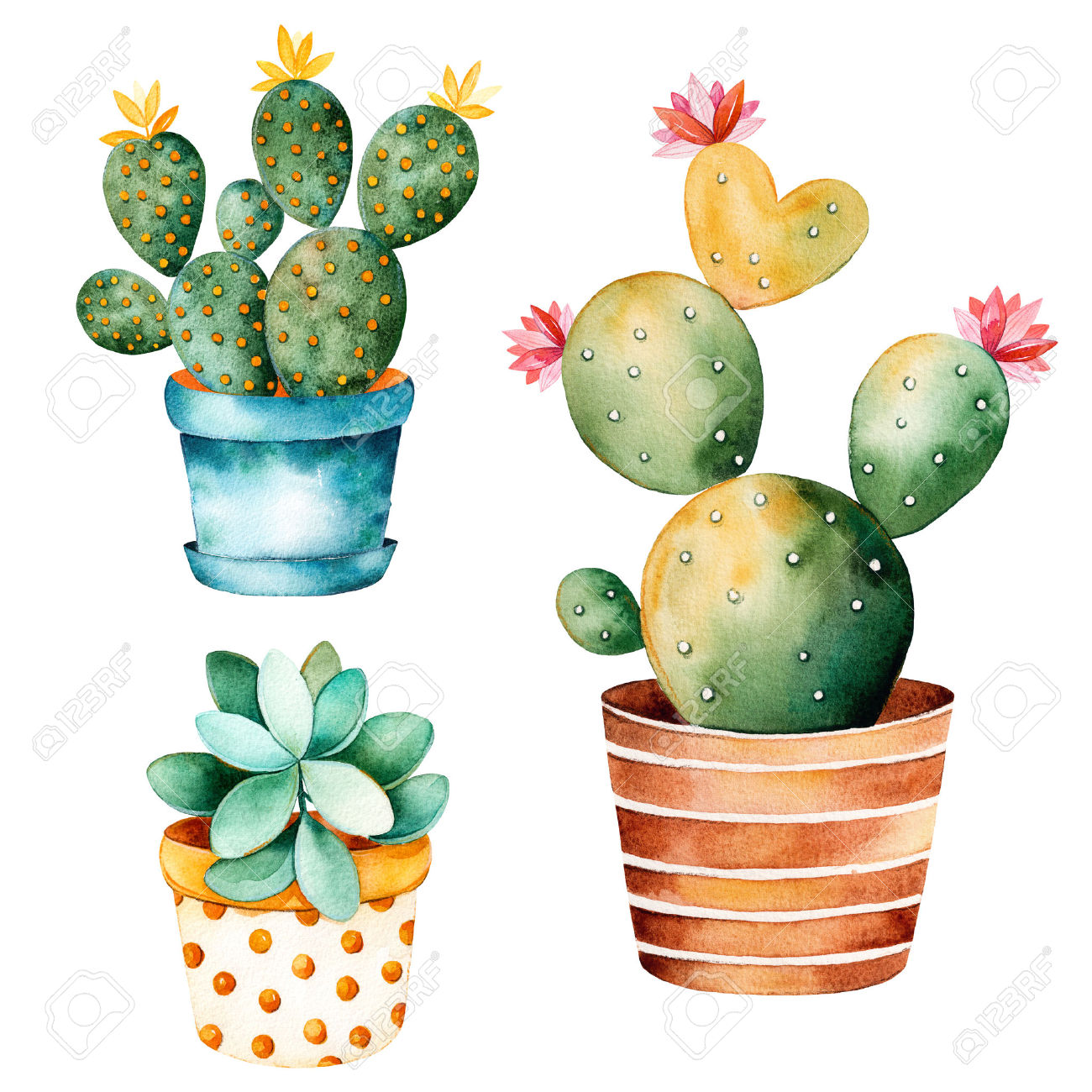Watercolor Handpainted Plant Cactus And Succulent Plant In Clipart.