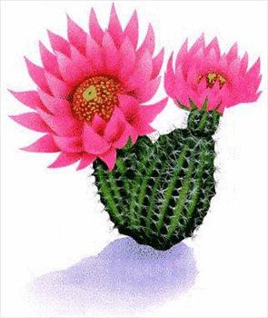 Cactus clipart image desert flower on a cactus.