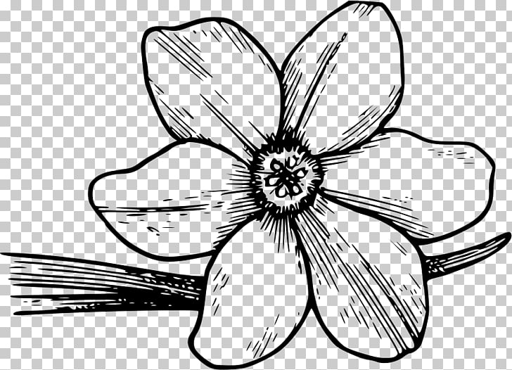 Flowering dogwood Drawing , Free s Azaleas PNG clipart.