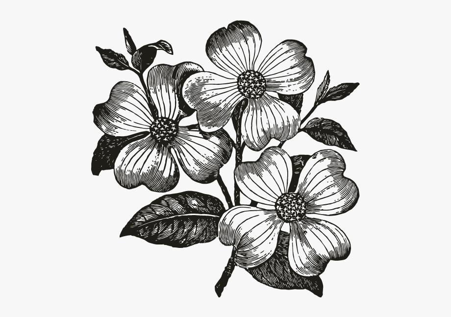 Dogwood Flower Clip Art , Transparent Cartoon, Free Cliparts.