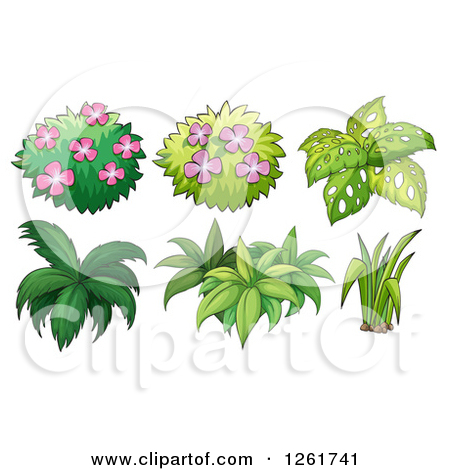 Clipart of Flowering Shrubs and Plants.