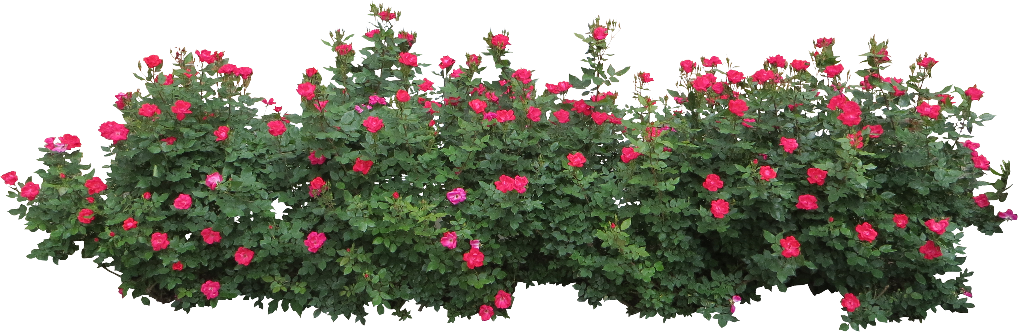Bushes PNG images free download, bush PNG.