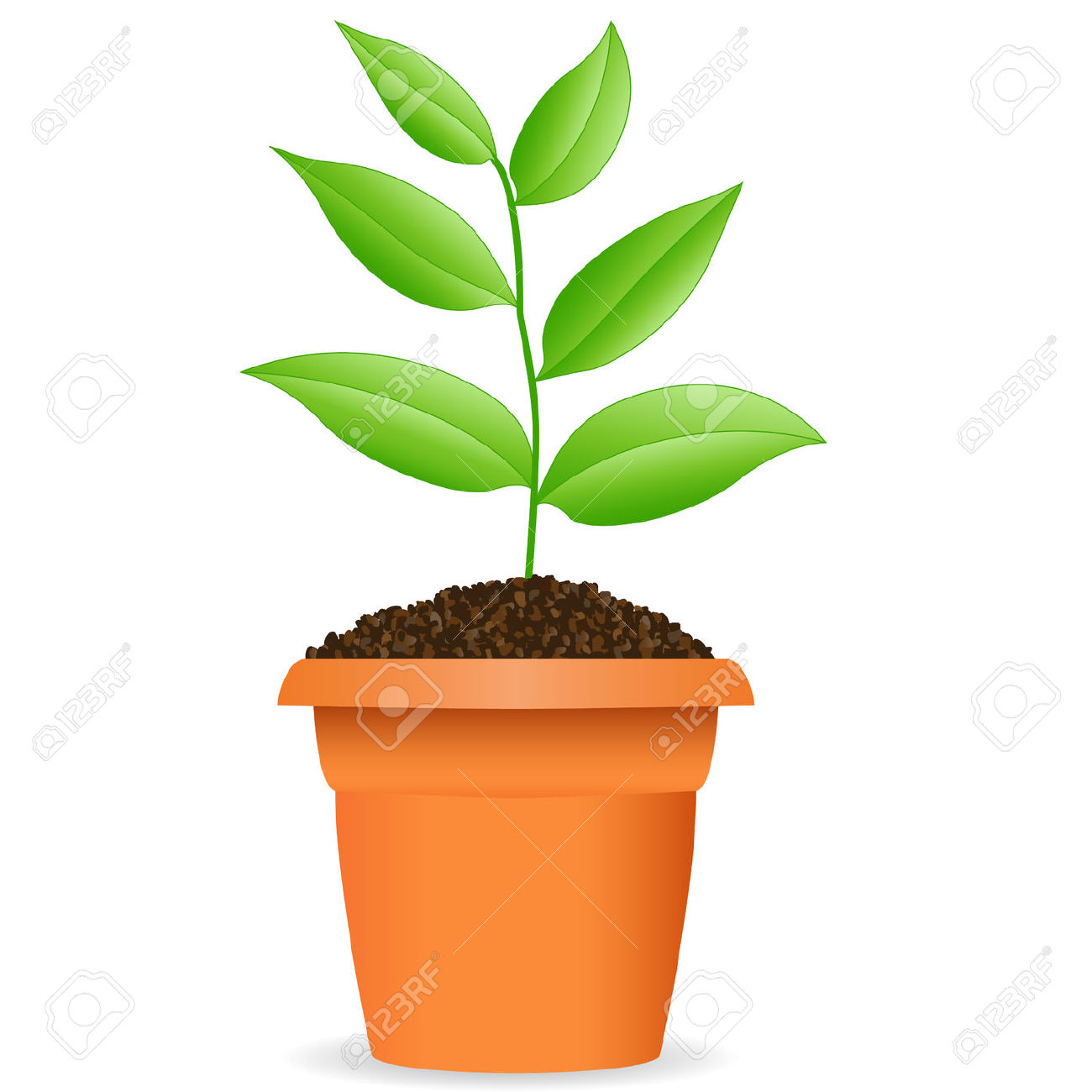 Plant in a pot clipart.