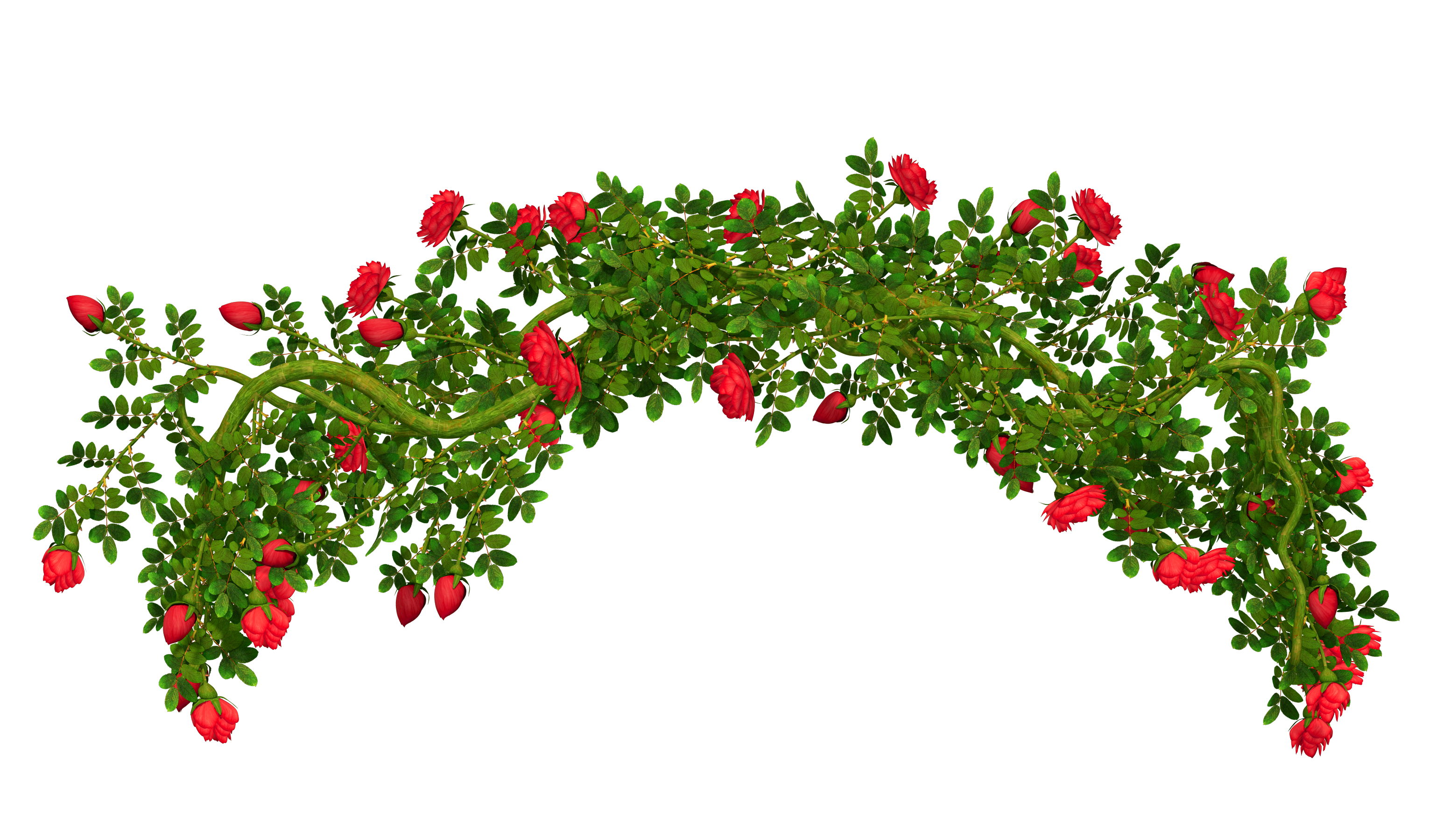 Rosebush Element PNG Clipart Picture.