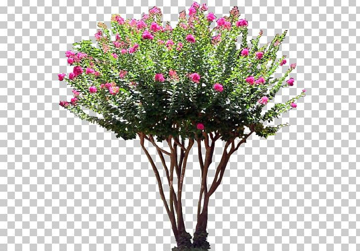 Shrub Tree Flower PNG, Clipart, Artificial Flower, Bougainvillea.