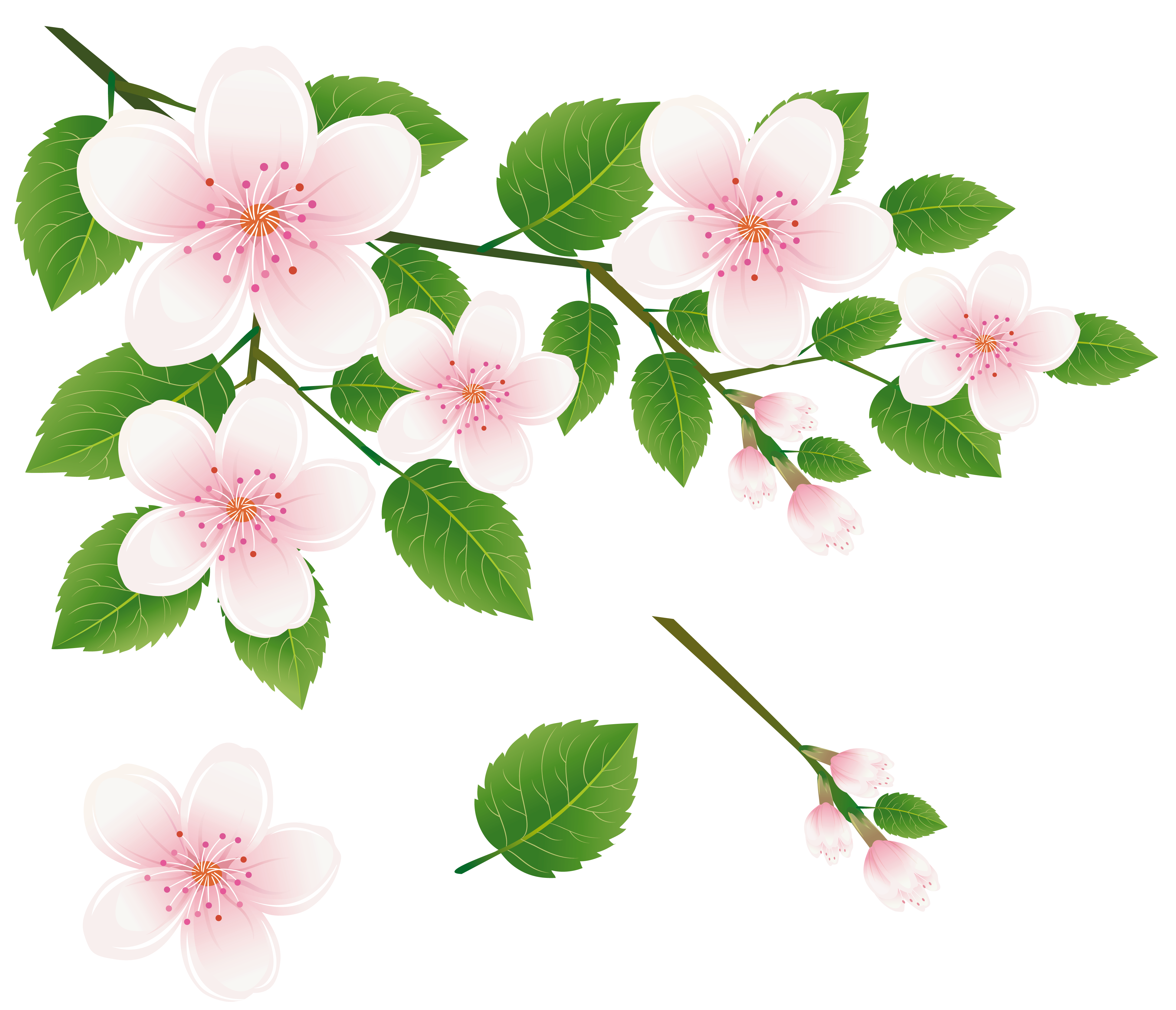 Spring Tree Branch with Flowers PNG Clipart Picture.