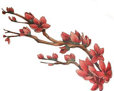 1000+ images about Bloemen en planten on Pinterest.
