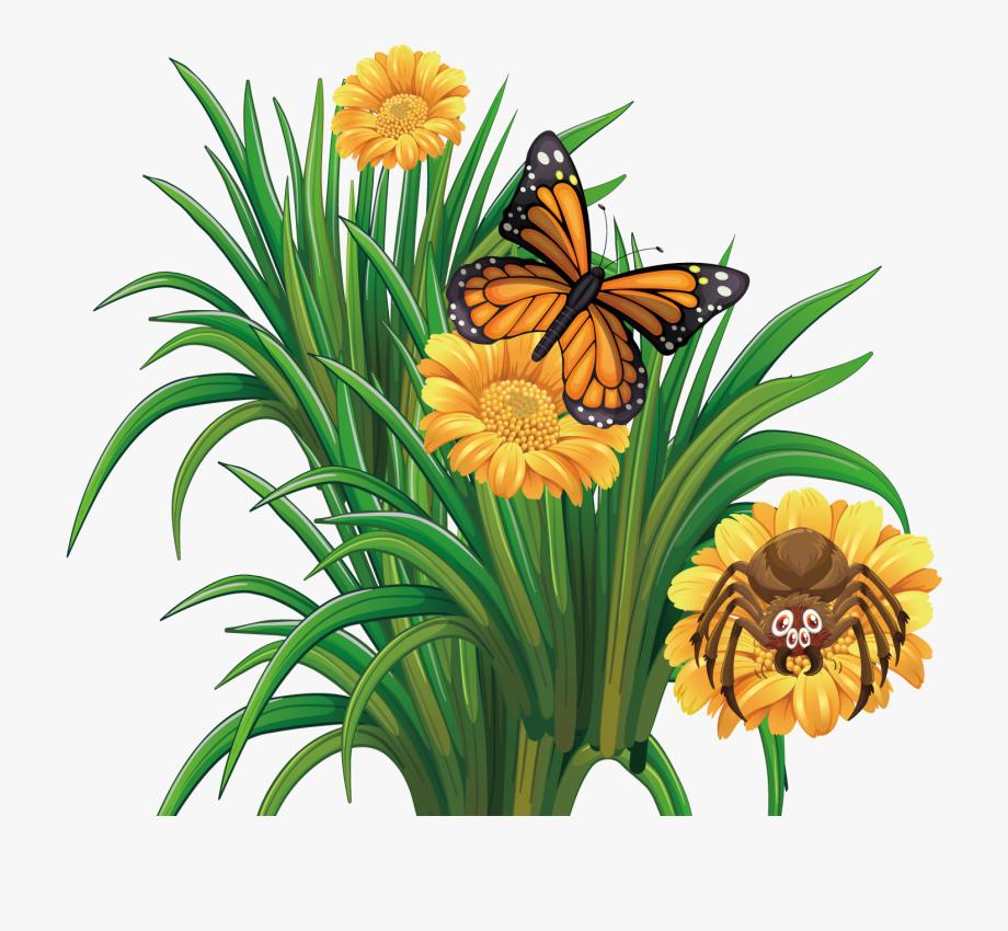 Monarch Butterfly Flower.