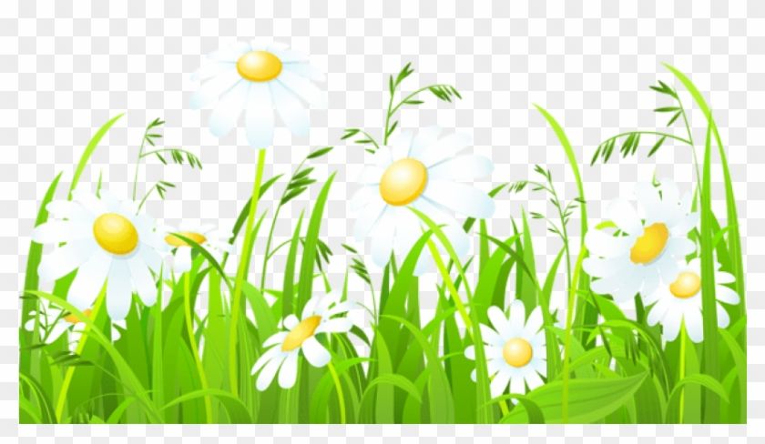 Free Png Download White Flowers And Grass Transparent.