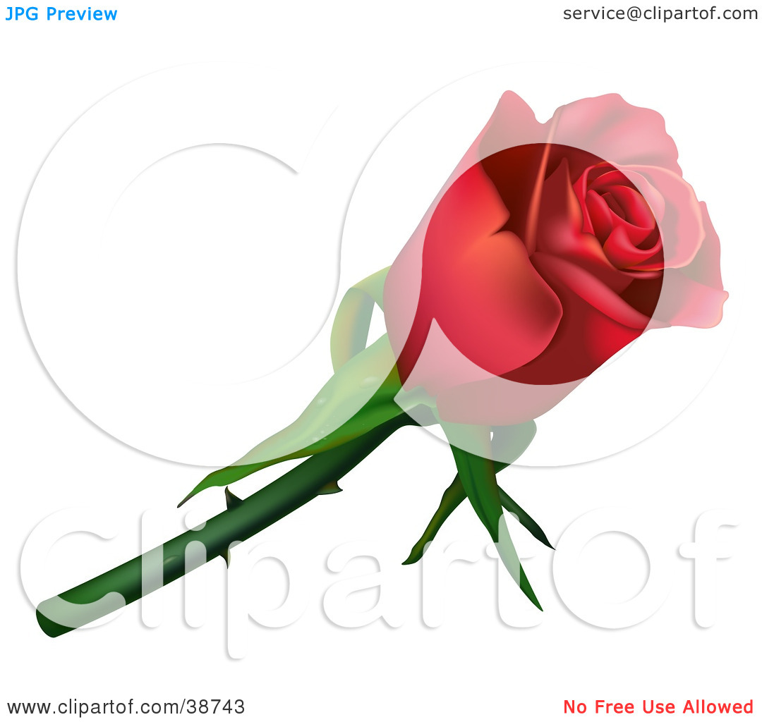Clipart Illustration of a Single Red Rose With Thorns by dero #38743.
