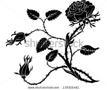 Thorny Rose Stock Photos, Royalty.