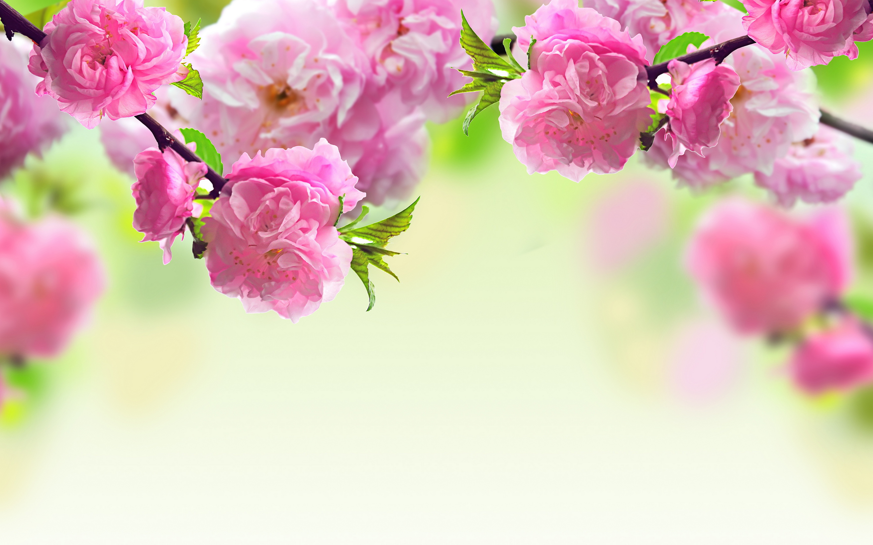 Background Flowers Wallpaper.