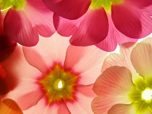 Flowers background free stock photos download (18,281 Free stock.