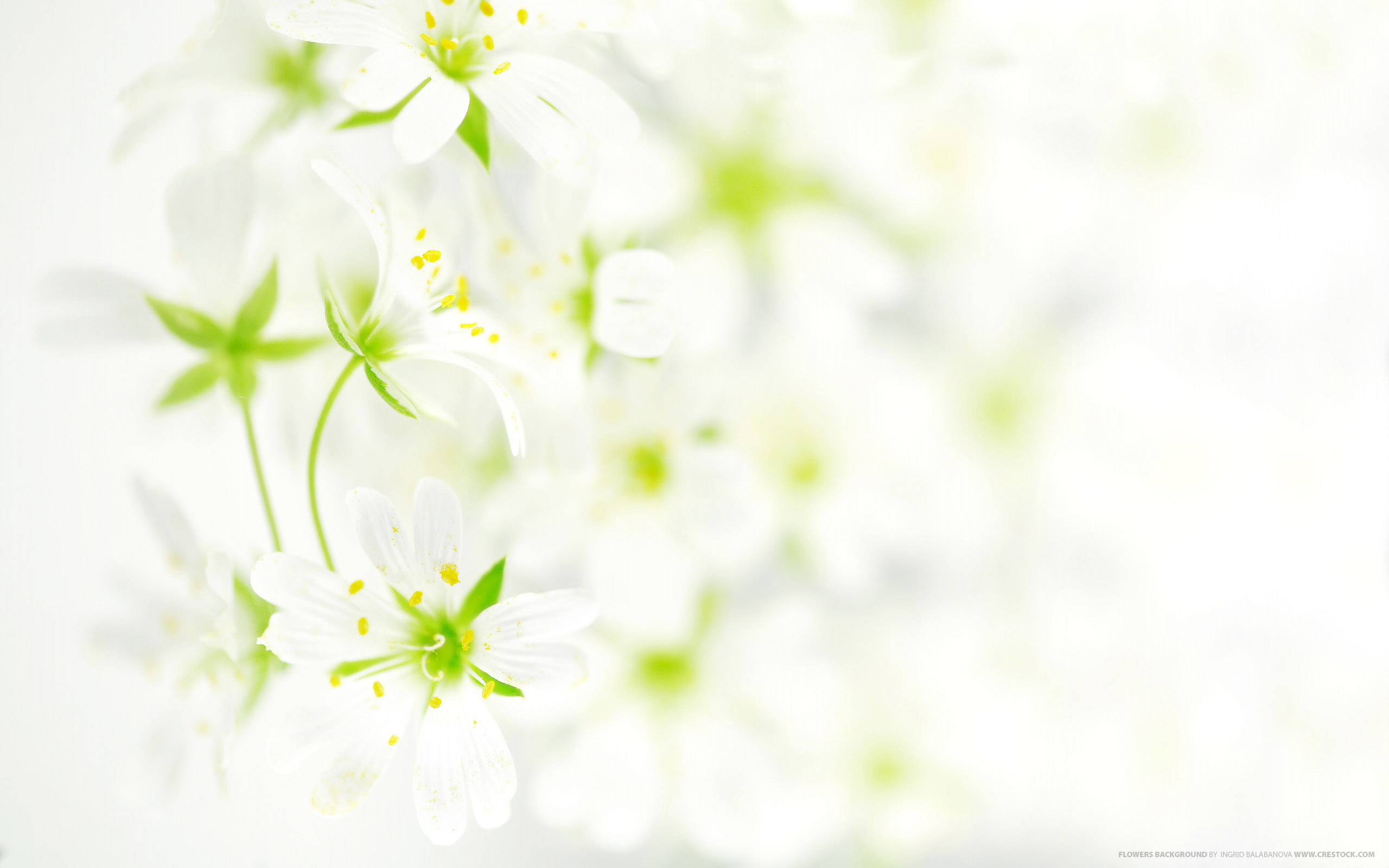 Flowers background wallpaper.