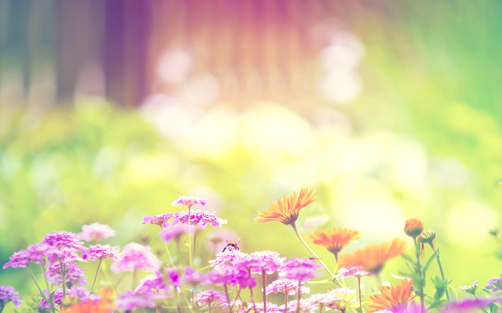 Flowers Backgrounds Wallpaper.