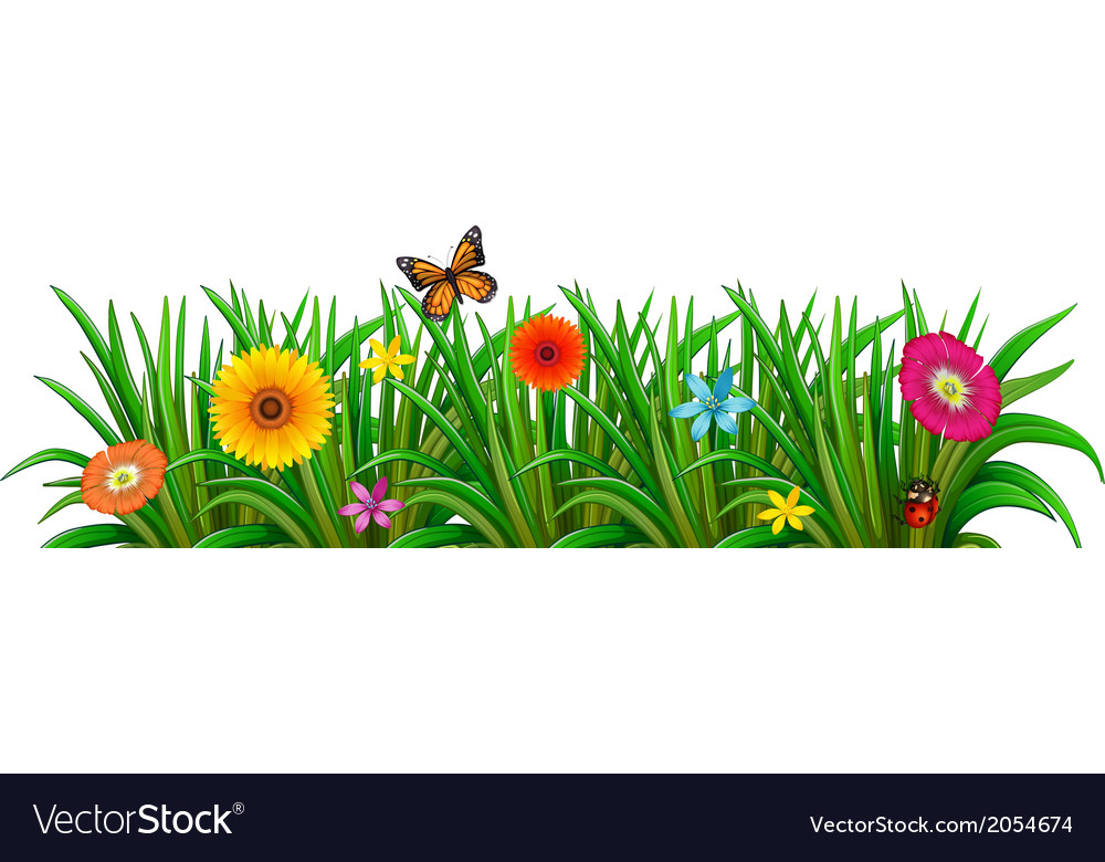 A garden with fresh blooming flowers a butterfly.