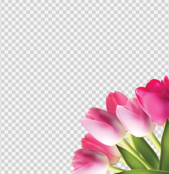 Best Transparent Flower Illustrations, Royalty.