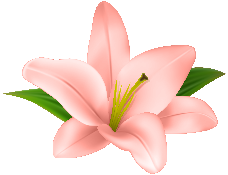 Lilly Flower Transparent Clip Art.