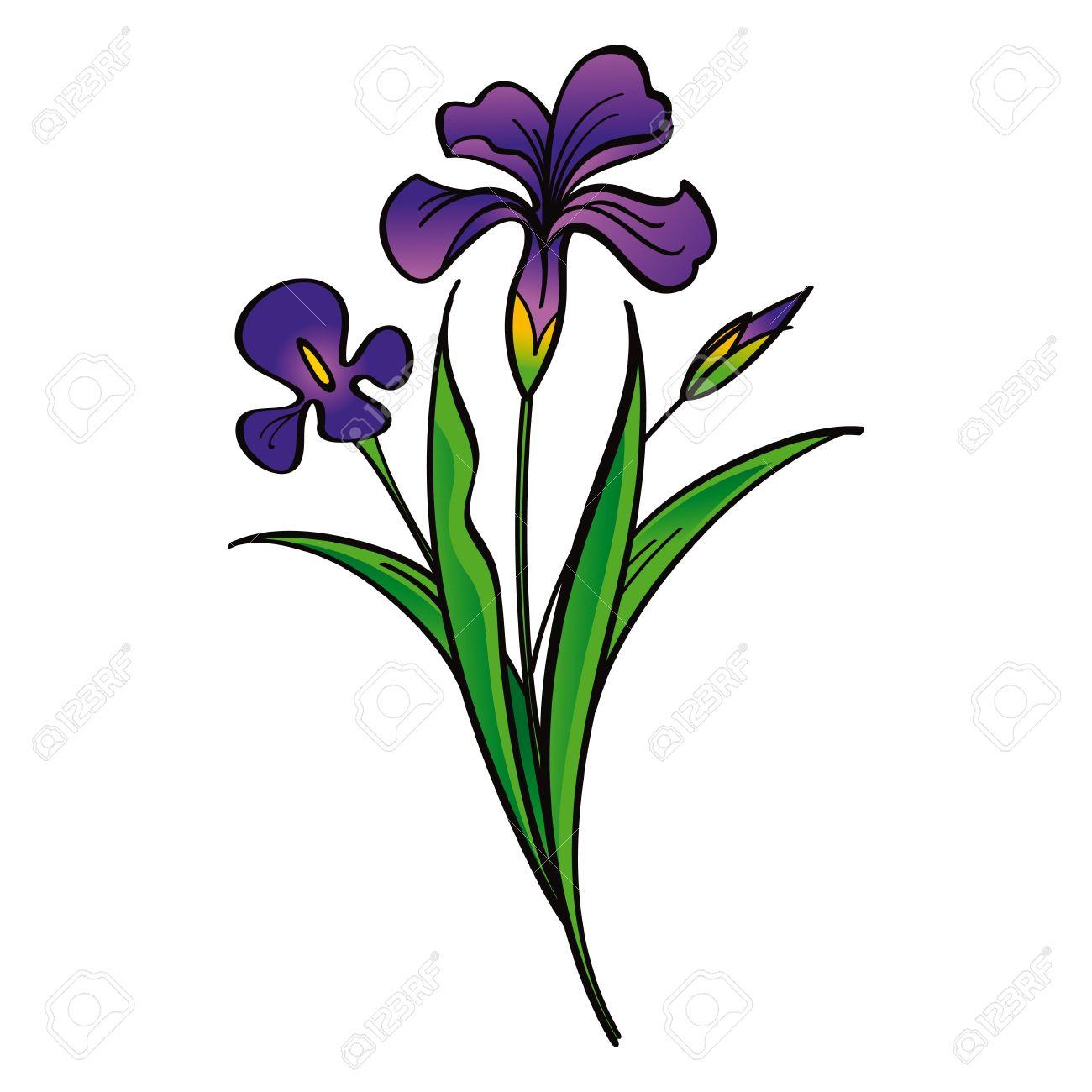 Iris clip art.