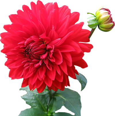 Download FLOWER Free PNG transparent image and clipart.
