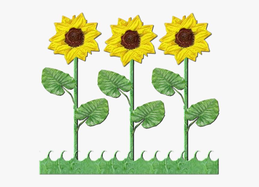 Flowers Row Of Sunflowers.