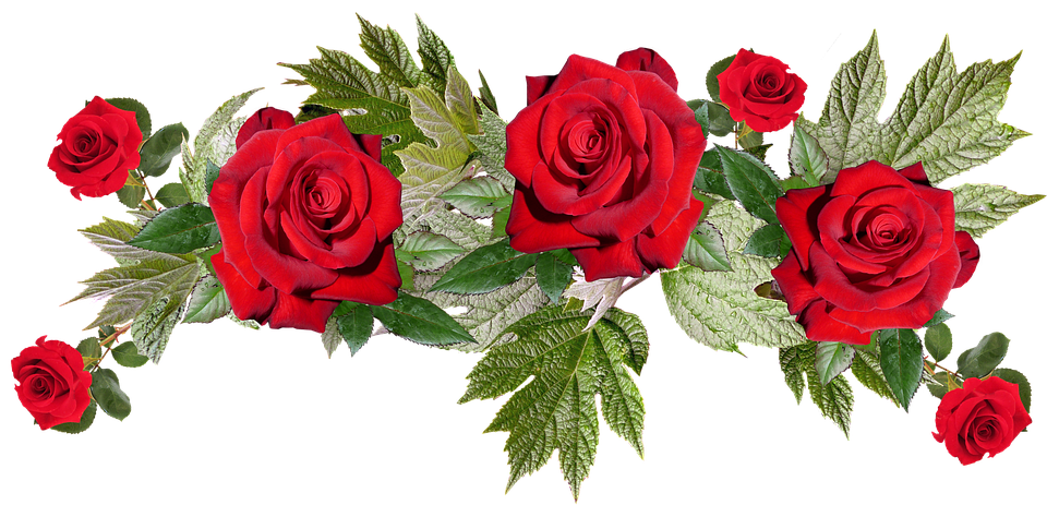 Red Flowers PNG Image with Transparent Background.