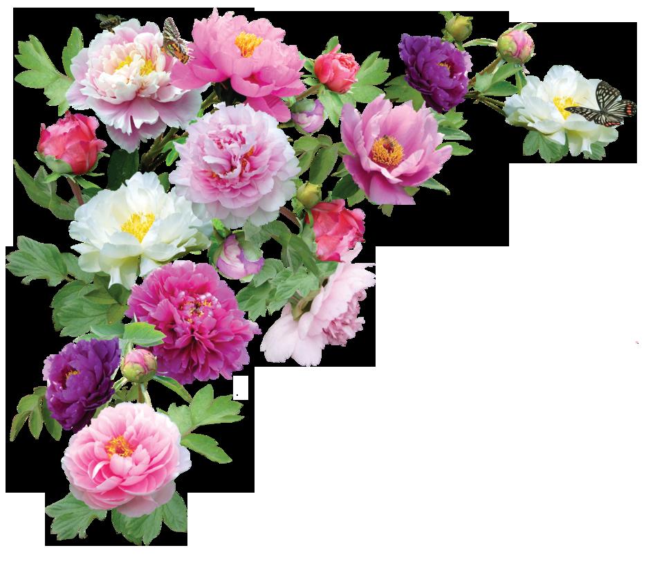 Download Flowers Transparent PNG 187.