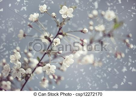 Picture of Early Spring. Abstract natural backgrounds with blossom.