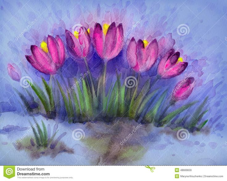 1000+ ideas about Early Spring Flowers on Pinterest.