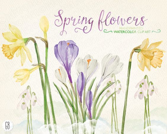 Watercolor early spring flowers, narcissus, crocus, snowdrops.