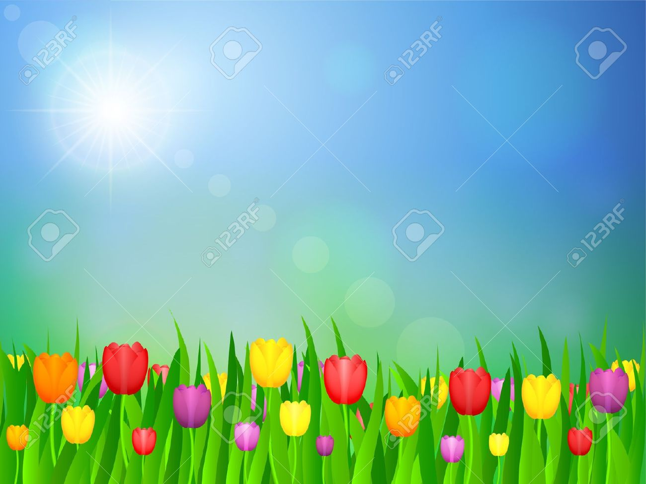 Tulip Flowers Field And Blue Sky. Vector Illustration. Royalty.