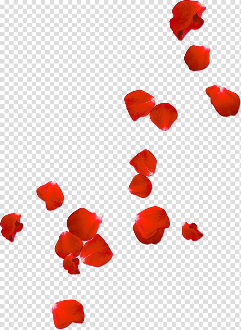 Red , red flower petals transparent background PNG clipart.