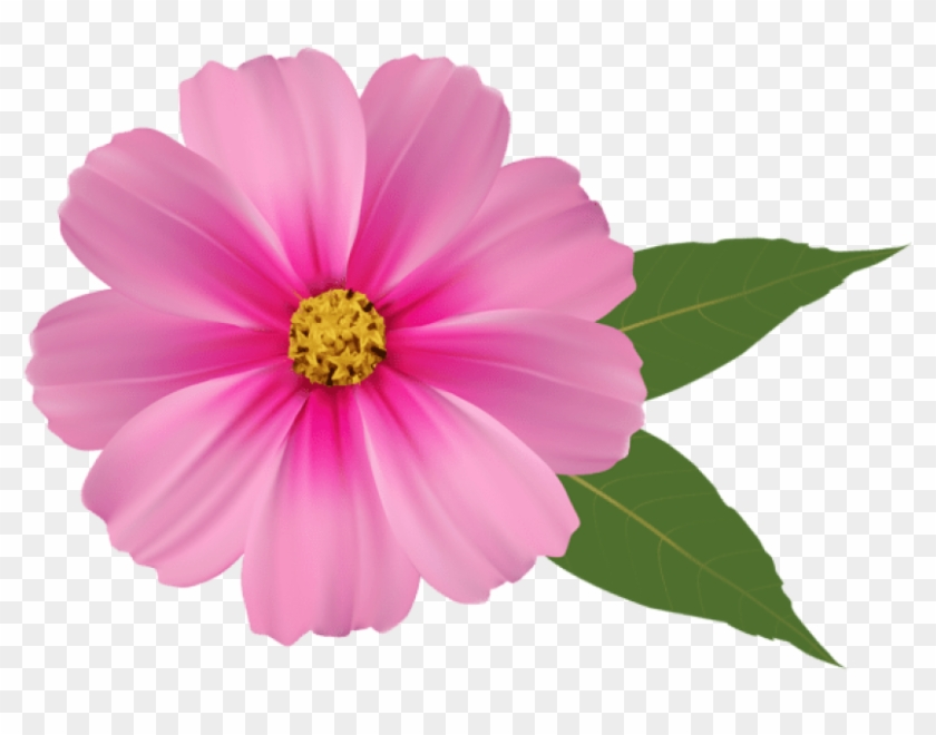 Free Png Download Pink Flower Png Images Background.